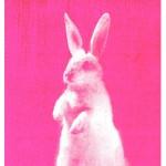 WKND – Inspiratie – color splurge