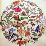 Gratis mandala download van dieren in Nederland