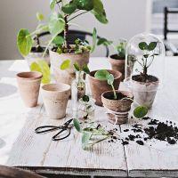 Het Groene Loslaten voor beginners