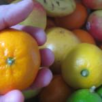 Groente en fruit door de ogen van kinderen