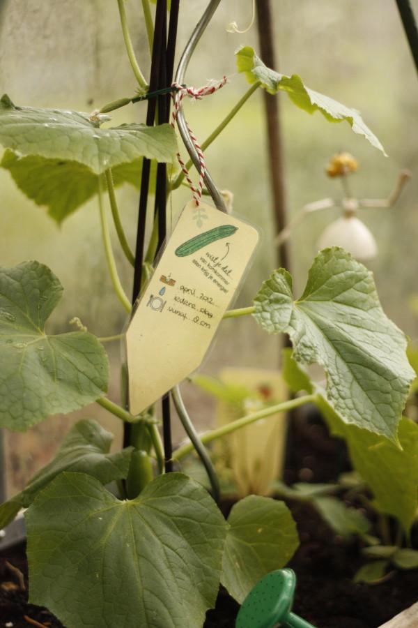moestuin, plantenstekers, plantenlabels