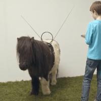 Deze pony bestuur je met een app! #Echtwaar