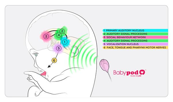 BabyPod-Cerebro-A-1_en