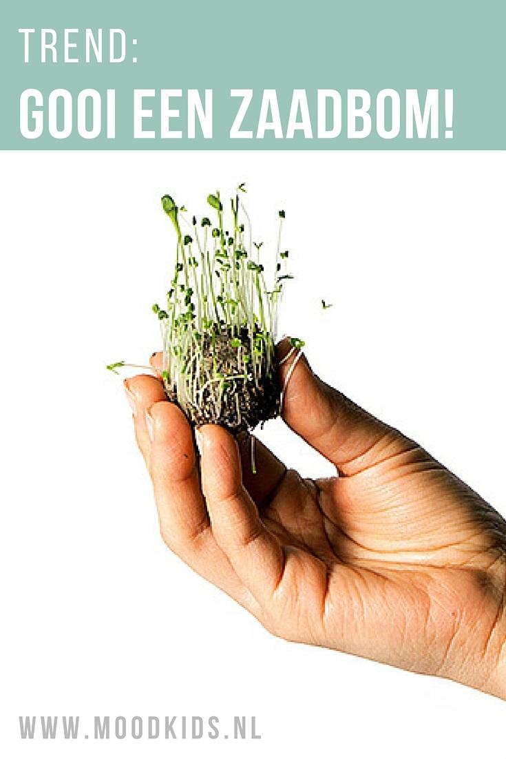 Guerilla tuinieren: het stiekem aanleggen van tuintjes waar dat niet mag. Met deze zaadbommen draag jij ook een steentje bij aan een groenere omgeving.