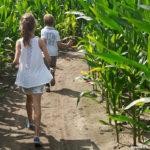 Dolen in een maisdoolhof