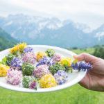 Balletjes roomkaas met kruiden en bloemen
