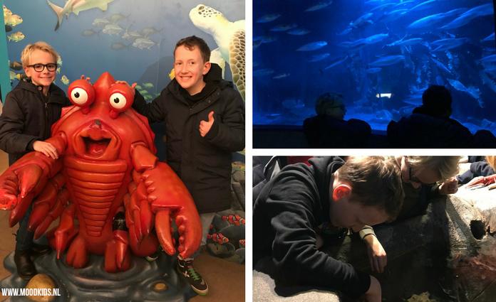 Bezoek SEA LIFE Oberhausen voor een geweldig uitje. Ongeveer een uurtje rijden van Arnhem en prima te combineren met Legoland Discovery Centre Oberhausen.