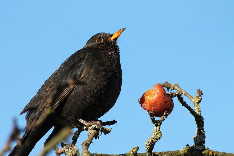 Vogels Nederland Tuin : Hoe krijg je meer vogels in je tuin moodkids