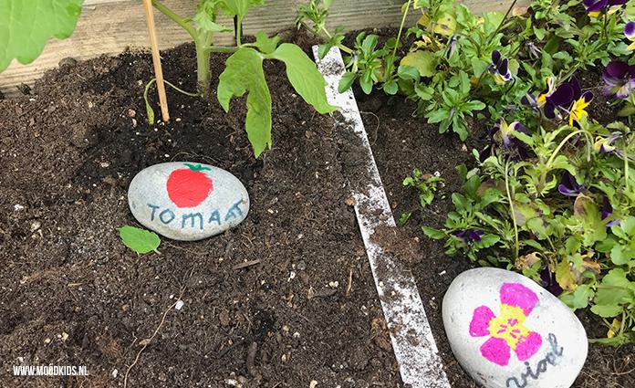 We hebben de moestuin weer onder handen genomen. Job maakte leuke plantenlabels van steen. Zo zijn de (kleine) plantjes goed uit elkaar te houden.
