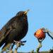 Wil je meer vogels in je tuin? Check deze handige tips voor jouw tuin.